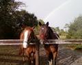 Washington Loop horses