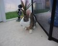 Anna's rabbit