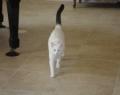 Tyer's cat