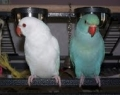 Joan's birds